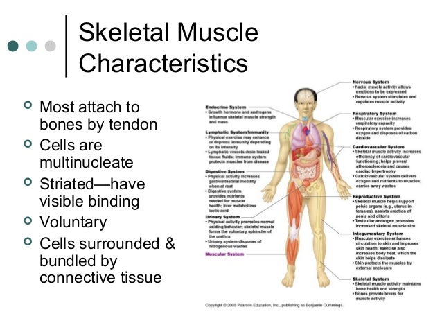 exercise 2 skeletal muscle Document read online physioex 90 exercise 2 skeletal muscle physiology answers physioex 90 exercise 2 skeletal muscle physiology answers - in this site is not the similar as a solution.