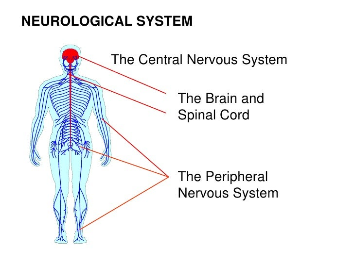 the neuromuscular system Muscular system is the system of human body that provides motor power for all movements of body parts muscular system is composed of special tissue called muscular tissue.
