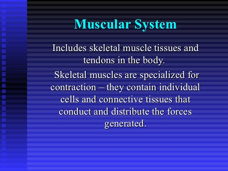 Muscular System Includes skeletal muscle tissues and tendons in the body.  Skeletal muscles are specialized for contractio...