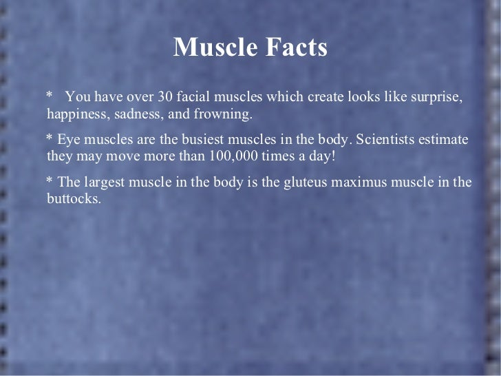 5 facts about the muscular system – applecool, Muscles