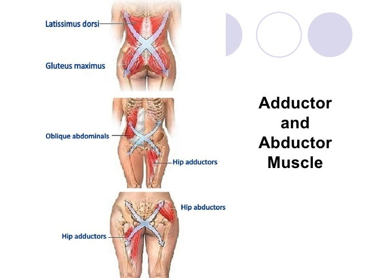 abductor muscle – citybeauty, Human body