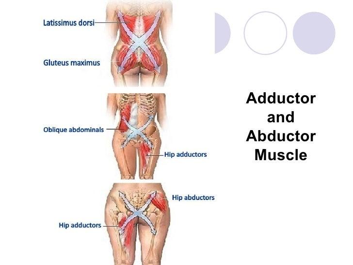 mascular system, Human Body