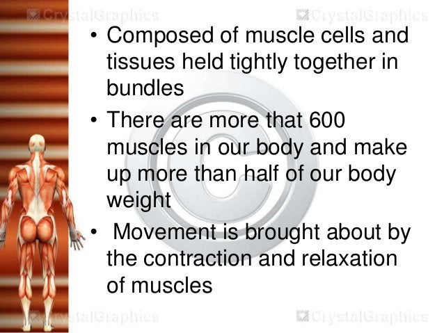 • Composed of muscle cells and  tissues held tightly together in  bundles• There are more that 600  muscles in our body an...