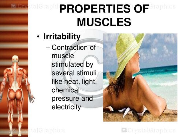 PROPERTIES OF         MUSCLES• Irritability  – Contraction of    muscle    stimulated by    several stimuli    like heat, ...