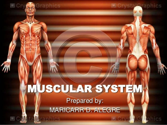 MUSCULAR SYSTEM      Prepared by:  MARICARR D. ALEGRE