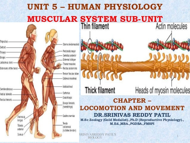 UNIT 5 – HUMAN PHYSIOLOGY           MUSCULAR SYSTEM SUB-UNIT                                       CHAPTER –              ...