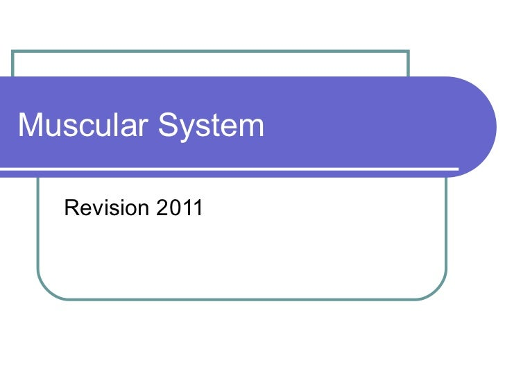 Muscular System Revision 2011
