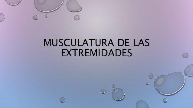 MUSCULATURA DE LAS EXTREMIDADES