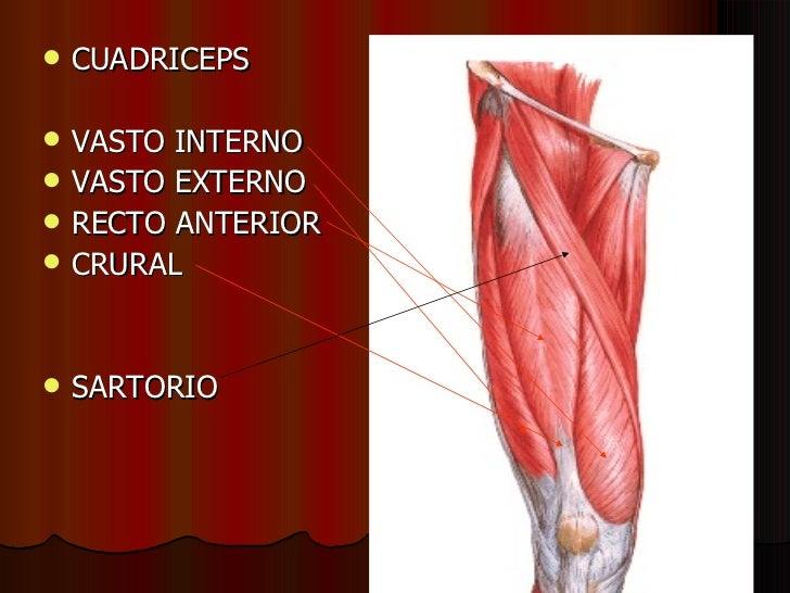 musculatura generalidades desarrollo motor ii