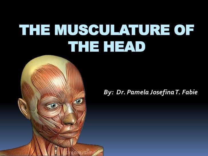THE MUSCULATURE OF     THE HEAD        By: Dr. Pamela Josefina T. Fabie