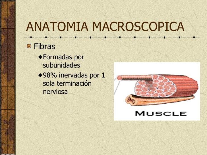 Musculo EsqueléTico I Complet