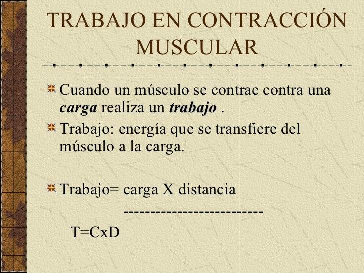 Musculo EsqueléTico Ii Complet Slide 2