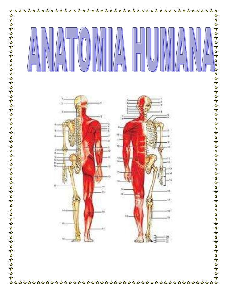 MUSCULOS:Músculos del cuerpoLos músculos representan la parte activa del aparato locomotor. Es decir,son los que permiten ...