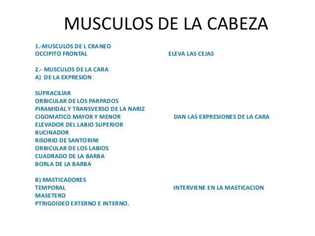 MUSCULOS DE LA CABEZA1.-MUSCULOS DE L CRANEOOCCIPITO FRONTAL                     ELEVA LAS CEJAS2.- MUSCULOS DE LA CARAA) ...
