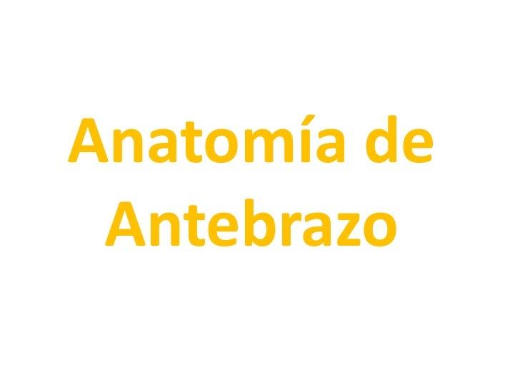 Anatomía de Antebrazo<br />