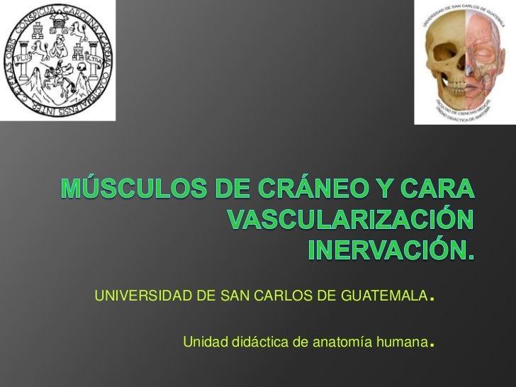 UNIVERSIDAD DE SAN CARLOS DE GUATEMALA          .          Unidad didáctica de anatomía humana   .