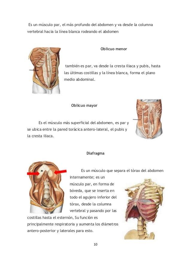 Musculos de cuello rita