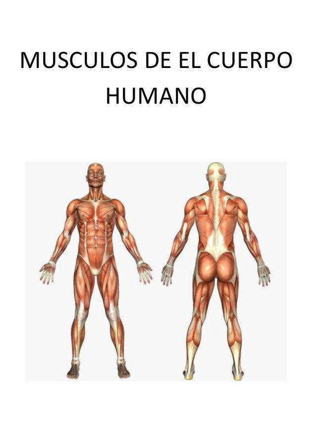 musculos-de-el-cuerpo-humano-1-638.jpg?cb=1501816265