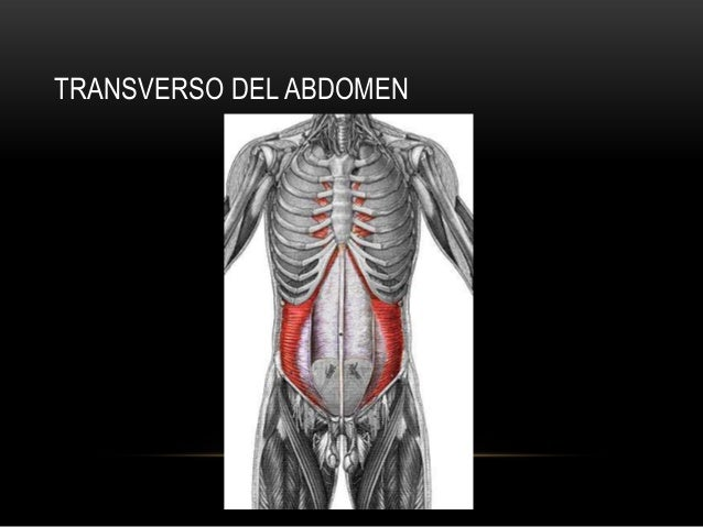 TRANSVERSO DEL ABDOMEN