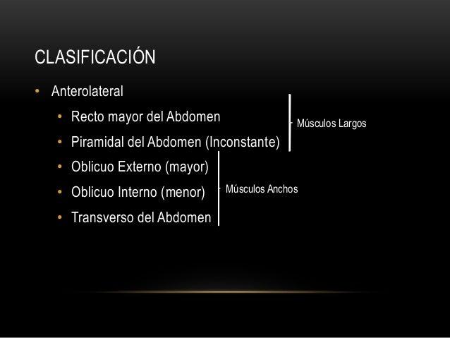 CLASIFICACIÓN • Anterolateral • Recto mayor del Abdomen • Piramidal del Abdomen (Inconstante) • Oblicuo Externo (mayor) • ...