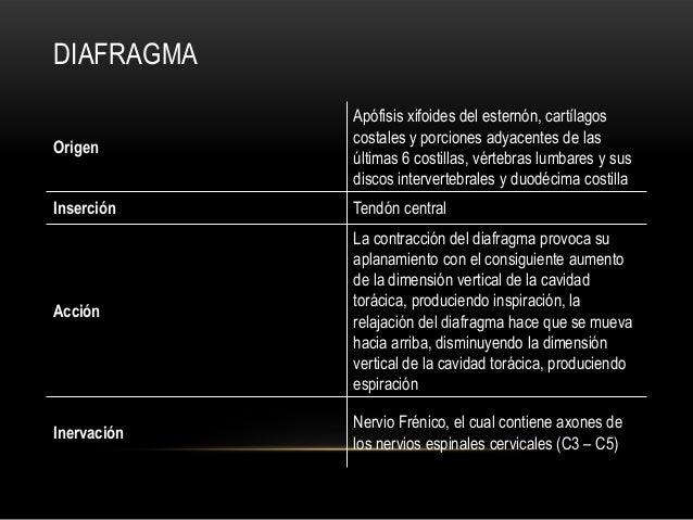 DIAFRAGMA Origen Apófisis xifoides del esternón, cartílagos costales y porciones adyacentes de las últimas 6 costillas, vé...
