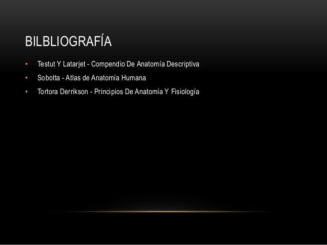 BILBLIOGRAFÍA • Testut Y Latarjet - Compendio De Anatomía Descriptiva • Sobotta - Atlas de Anatomía Humana • Tortora Derri...