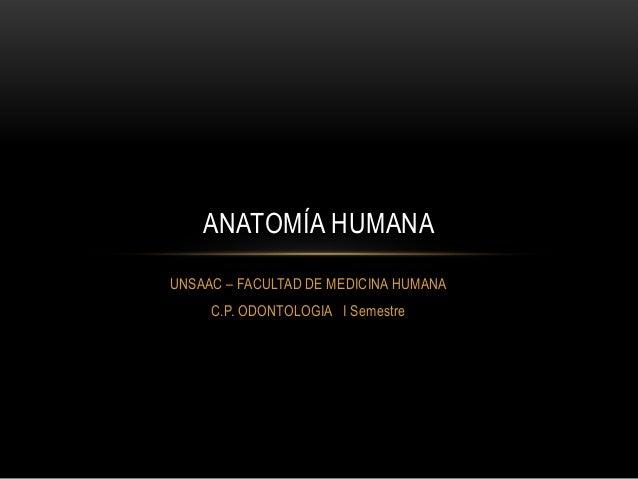 UNSAAC – FACULTAD DE MEDICINA HUMANA C.P. ODONTOLOGIA I Semestre ANATOMÍA HUMANA