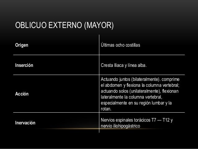 OBLICUO EXTERNO (MAYOR) Origen Últimas ocho costillas Inserción Cresta Iliaca y línea alba. Acción Actuando juntos (bilate...