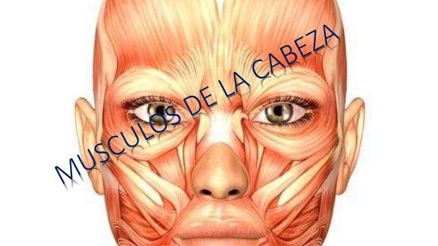 MUSCULOS SUBOCCIPITALES UBICACIÓN en la región prevertebral, entre el occipital y el atlas CARACTERISTICAS par pequeño y c...