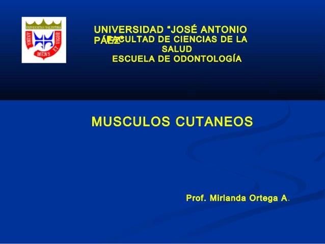 """UNIVERSIDAD """"JOSÉ ANTONIO PÁEZ""""FACULTAD DE CIENCIAS DE LA SALUD ESCUELA DE ODONTOLOGÍA Prof. Mirlanda Ortega A. MUSCULOS C..."""