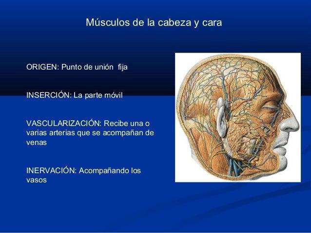 Musculos de la cara Slide 2