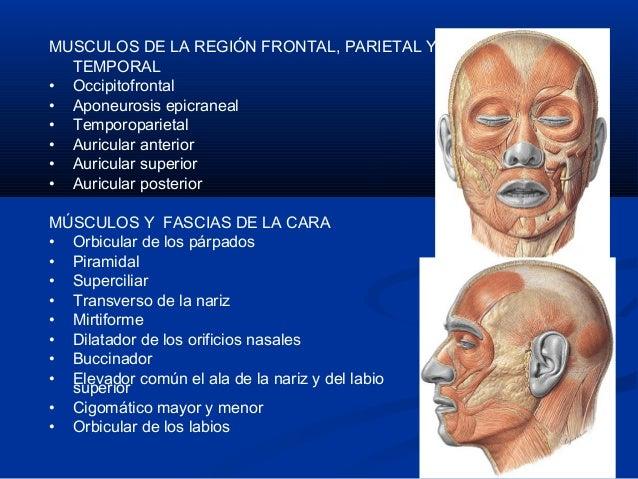 Musculos de la cara Slide 3