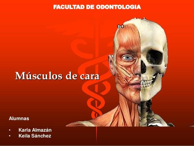 Músculos de cara Alumnas • Karla Almazán • Keila Sánchez FACULTAD DE ODONTOLOGIA