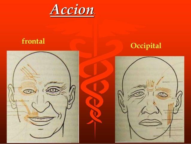 Origen Apofisis coronoides de la mandibula Insercion Fosa temporal, desde la linea curva temporal inf. hasta la cresta inf...