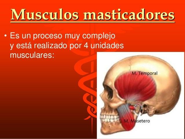 M.masetero Origen • Arco cigomatico • Angulo de la mandibula Insercion • Cara ext. de la rama ascendente del max. inf. Acc...