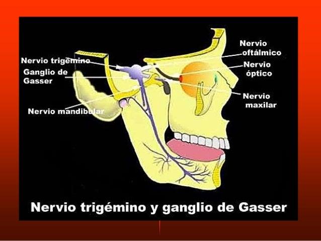 Se origina por dos haces: HAZ SUPERIOR O ESFENOIDAL Fasciculo sup- ala mayor del esfenoides HAZ INFERIOR O PTERIGOIDEO. Fa...
