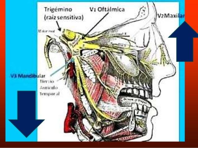 ORBICULAR DEL OJO. ORBITARIA: Origen-Region medial de la orbita. -ligamento palpebral. -Hueso lagrimal. Inserción: Rodean ...