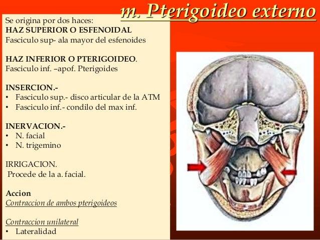 PARPEBRAL: • Origen: sujetas a los parpados por un ligamento parpeable medio. • Inervación: Nervio facial. • Función: -abr...
