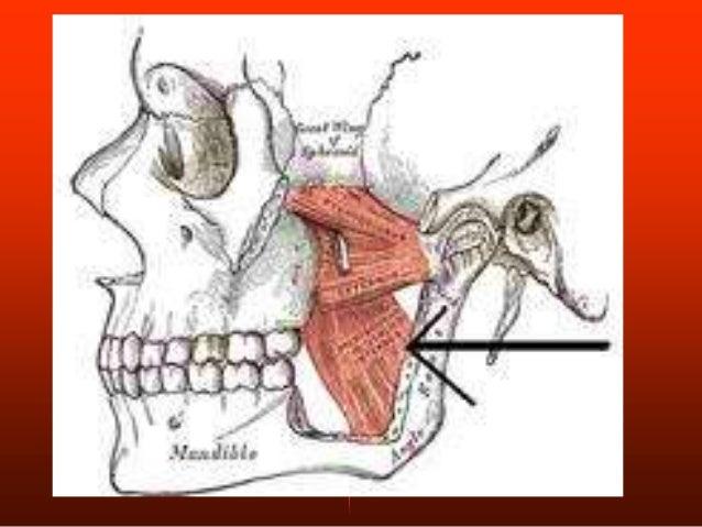 IRRIGACION: • Arteria oftálmica