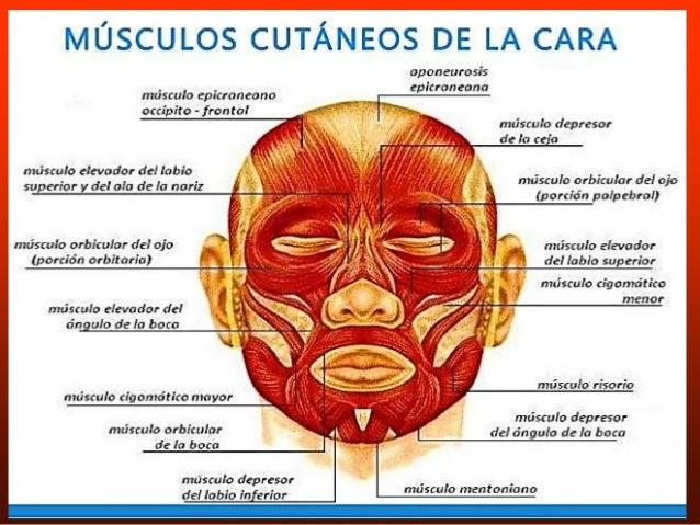 Qué es la cervicalgia o dolor cervical y cuáles son sus causas y ...