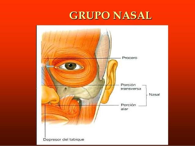M. Triangular de los labios o Depresor del ángulo de la boca. ORIGEN.- Nace en la línea oblicua de la mandíbula, por debaj...