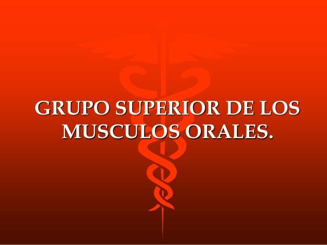 MUSC. AURICULAR SUPERIOR ORIGEN Proceden de la aponeurosis epicraneana INSERCION En la cara superointerna de la superficie...
