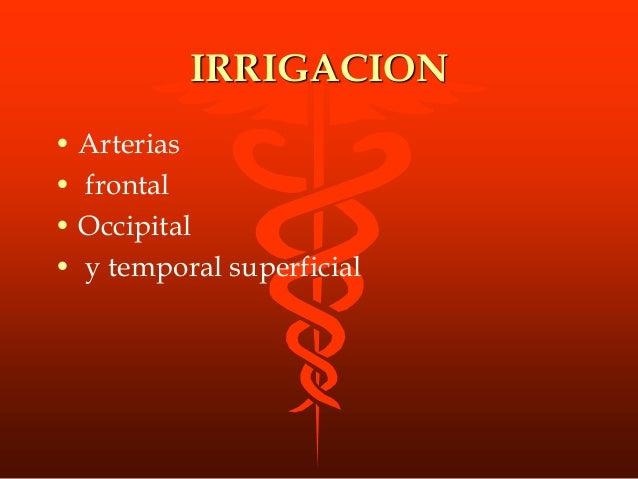 IRRIGACION • Arterias • frontal • Occipital • y temporal superficial