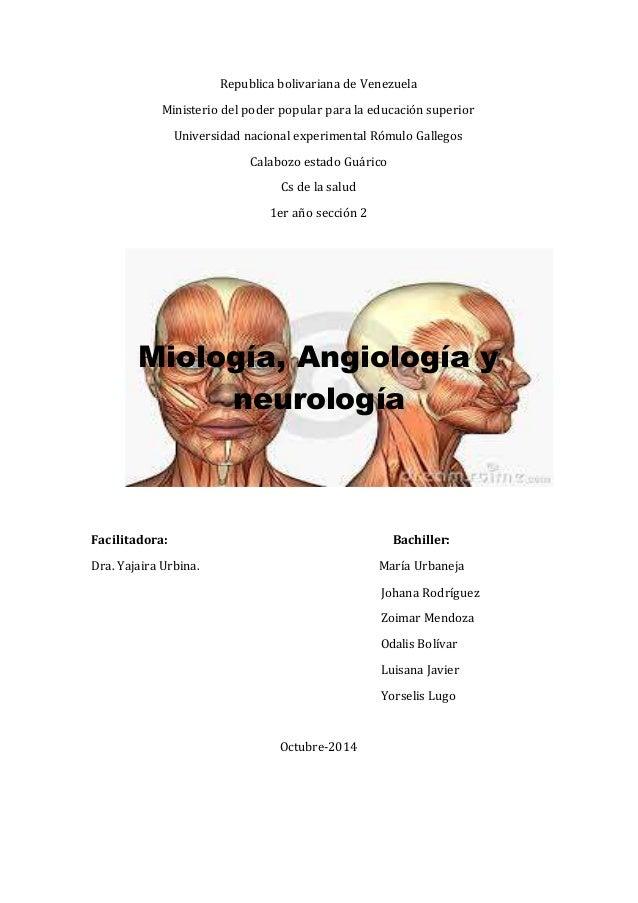 Musculos de la cara, arteria, vena y nervio facial anatomia