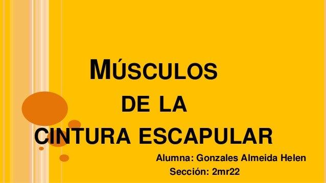 MÚSCULOS DE LA CINTURA ESCAPULAR Alumna: Gonzales Almeida Helen Sección: 2mr22