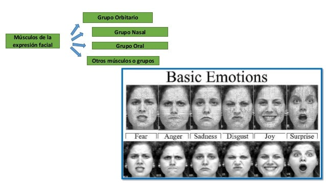 Musculos de la expresion facial Slide 2