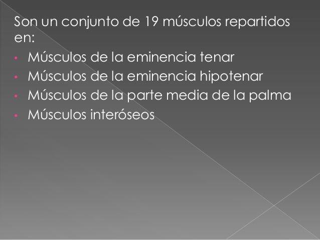 Musculos de la mano Slide 2