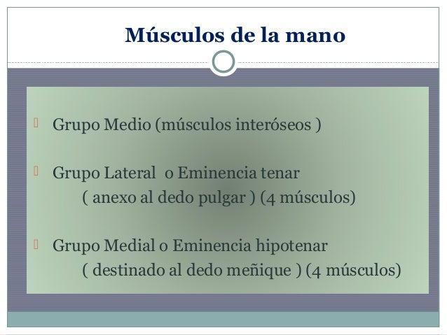Musculos de la mano dra franco 1 Slide 2