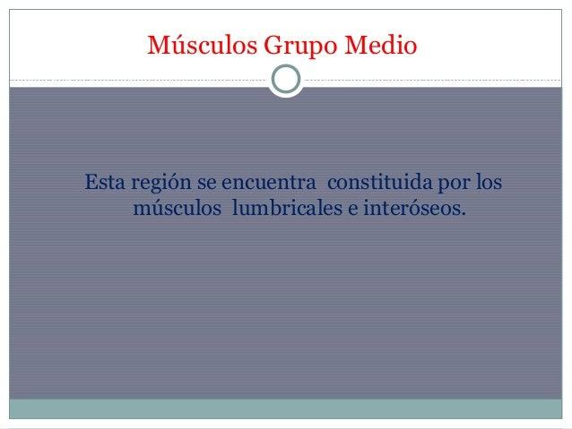 Musculos de la mano dra franco 1 Slide 3