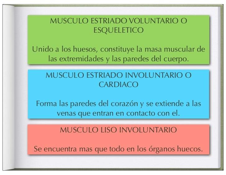 Musculos de la masticacion Slide 3